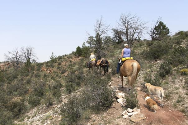 Horseback Riding in the Medicine Bow National Forest