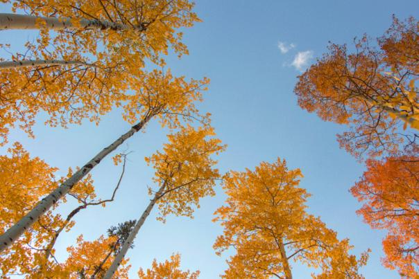 Fall in Laramie