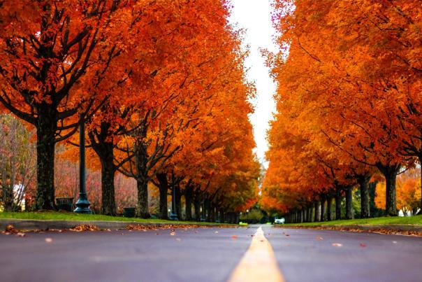 Fall in Lexington, Kentucky