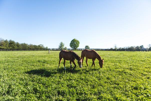 Millridge-Farm-39