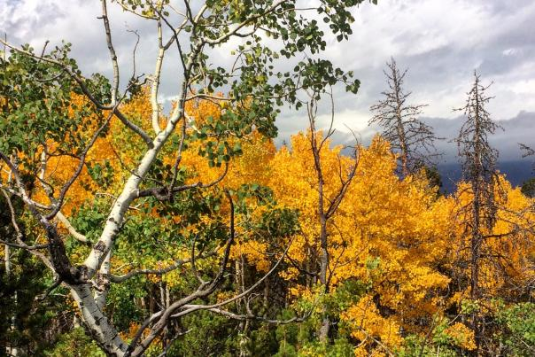 Fall Color in Rocky Mountain National Park.