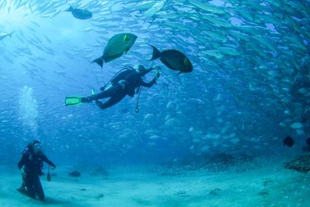 Diving in Los Cabos