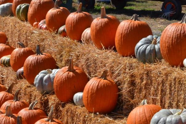 Leesburg Animal Park Pumpkins