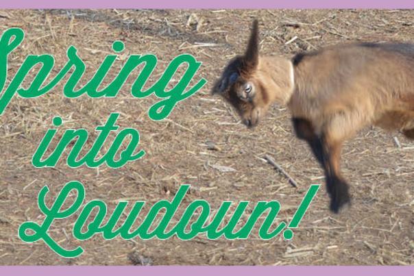 Spring Into Loudoun - Baby Goat