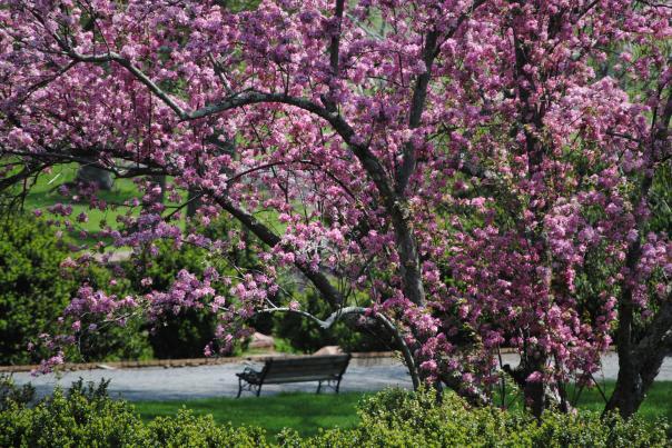 Morven Park Flowers
