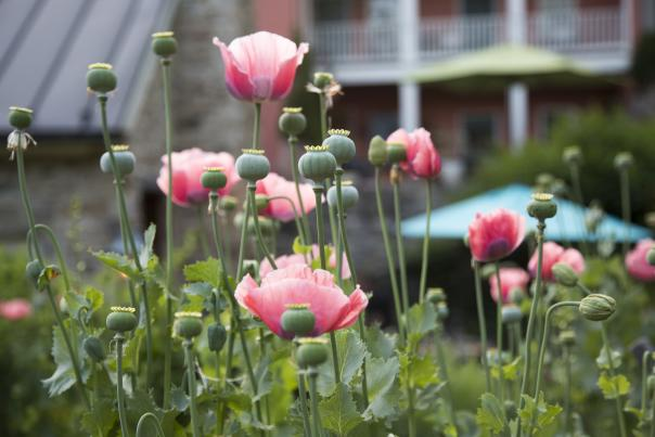 Spring in Loudoun