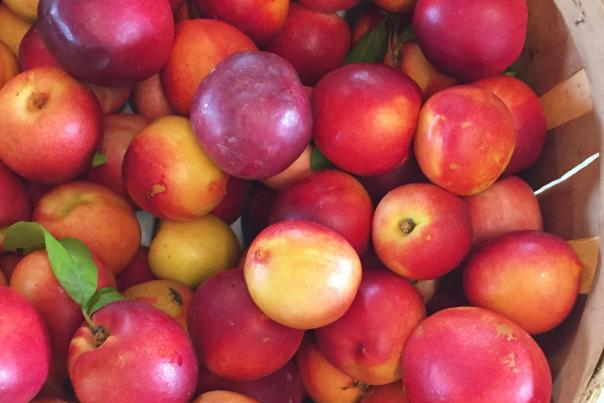 Great-Country-Farms-Peaches