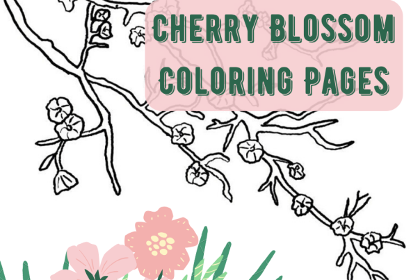 Cherry Blossom Coloring Page Header