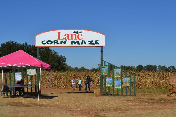 Lane Corn Maze