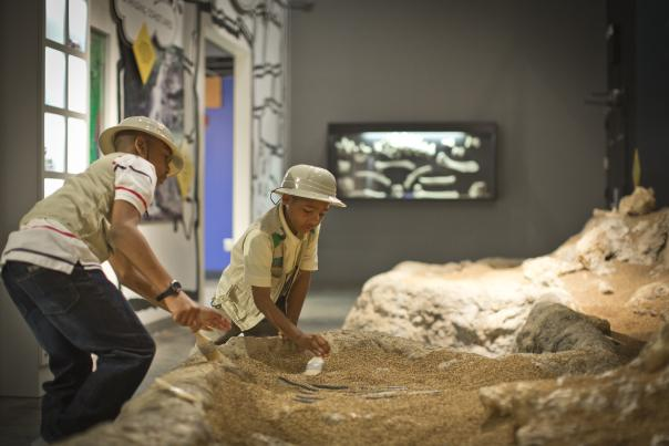 Kids Fossil Dig at Museum of Arts and Sciences