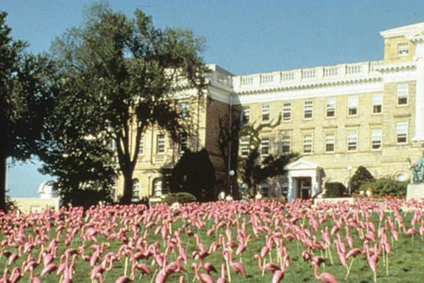 Flamingos_IH-2460x660