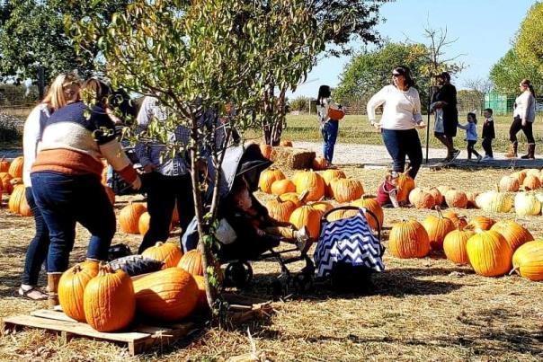 Pumpkin Farm at 5G Farm
