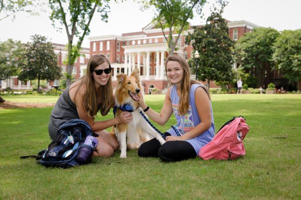 Dog on Georgia College front campus