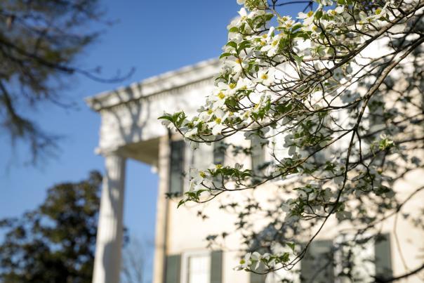 Rose Hill at Lockerly Arboretum in spring