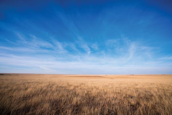 Open grasslands between Roy and Mosquero