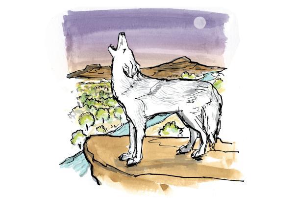 Coyotes Simon Romero