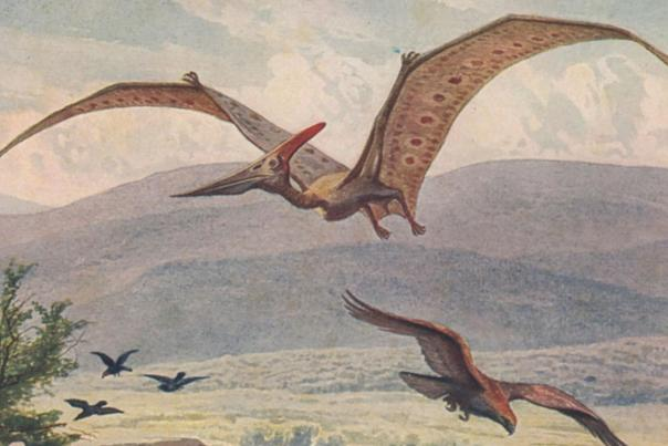 Pteranodons in Roswell