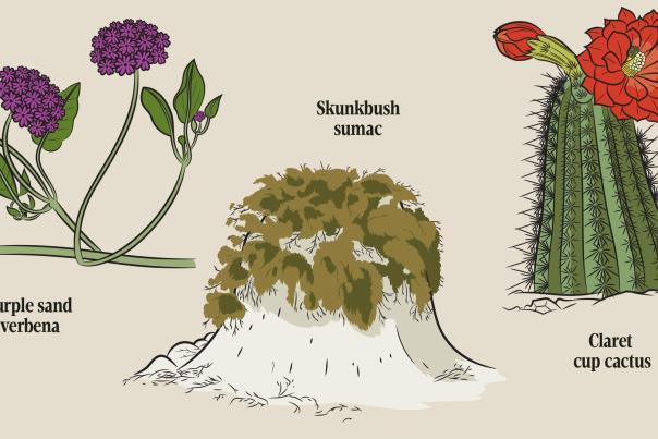 Plants at White Sands National Park