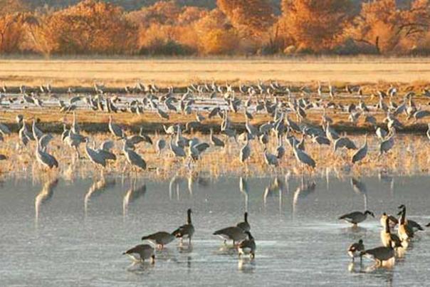 Birdwatching -cranes