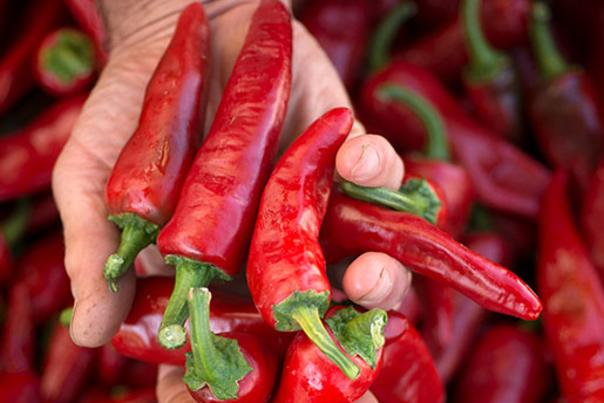 A handful of red chile peppers.