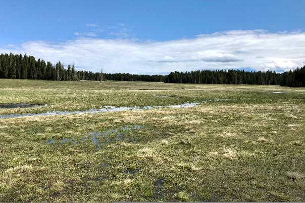 A boggy meadow in the San Pedro Parks Wilderness