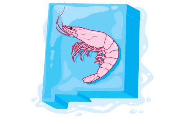 Gulf Shrimp New Mexico