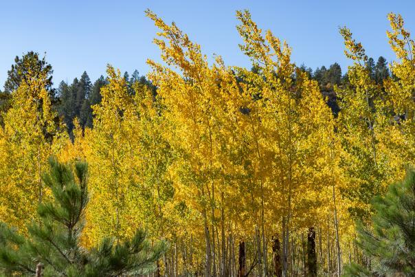 Fall colors in Jemez