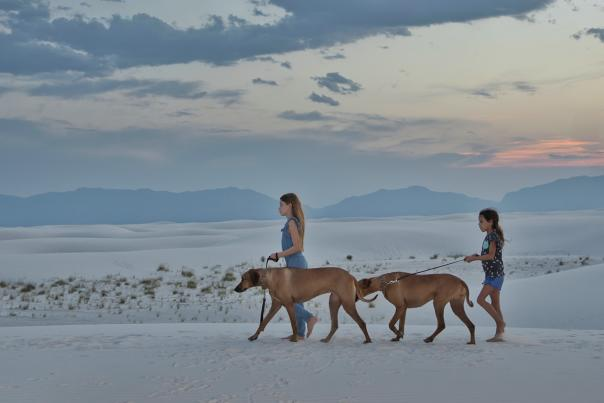 Two kids walking two dogs on the dunes at White Sands National Park