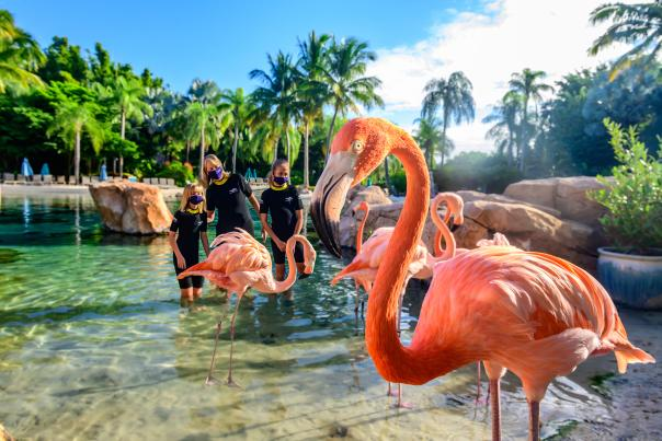 Family enjoying the Discovery Cove Flamingo Mingle