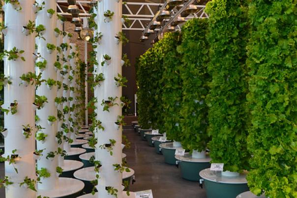Hydroponics at the Orange County Convention Center