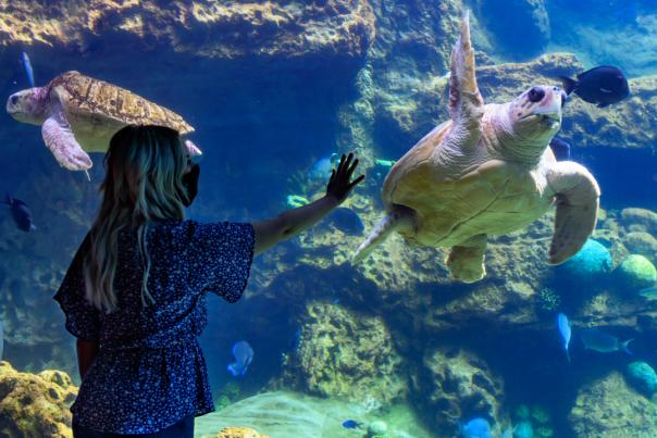 SeaWorld® Orlando guests with face masks aquarium turtles