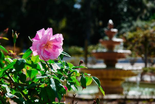 Flower at Harry P. Leu Gardens
