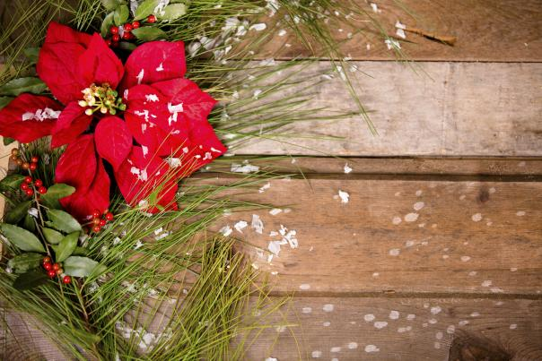 Red poinsettia with berries, pine needles and snow flakes on a wooden background