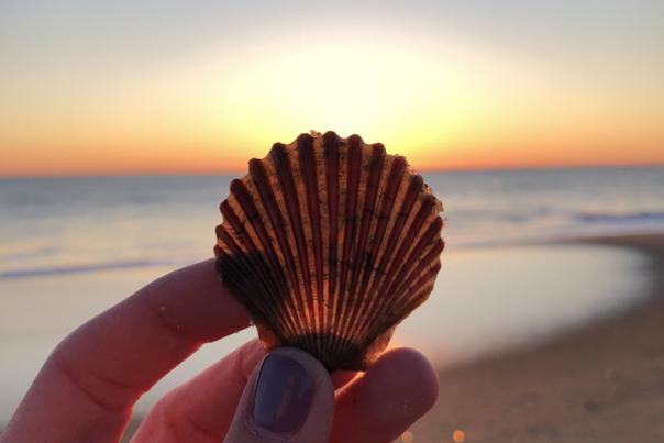 Seashell Beach Travel Persona Quiz