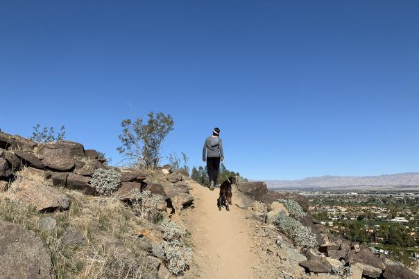 easy hikes in Palm Springs