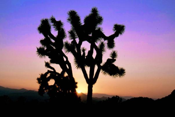 desert x featured web