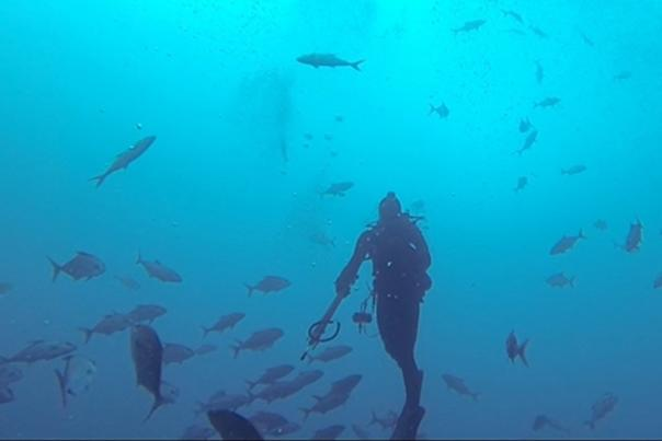 Experience scuba in PCB