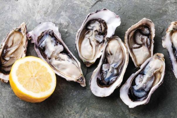 Oyster banner image