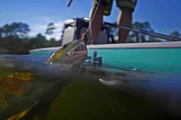 Redfish Paddleboard - Chasin' the Sun