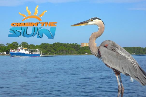 Chasin' the Sun logo with Heron