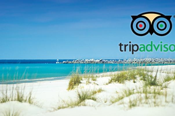 Trip Advisor Graphic
