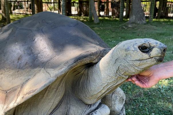 George the Tortoise