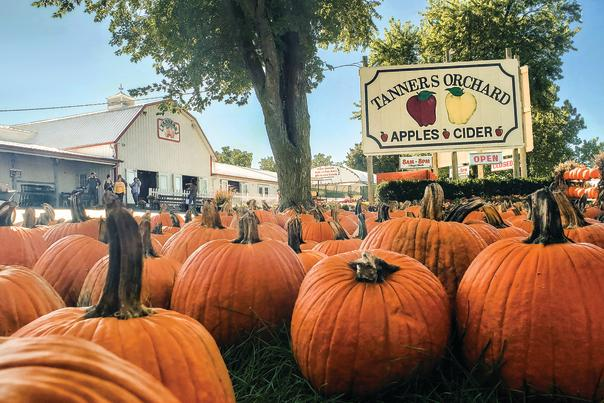 Tanner's Orchard