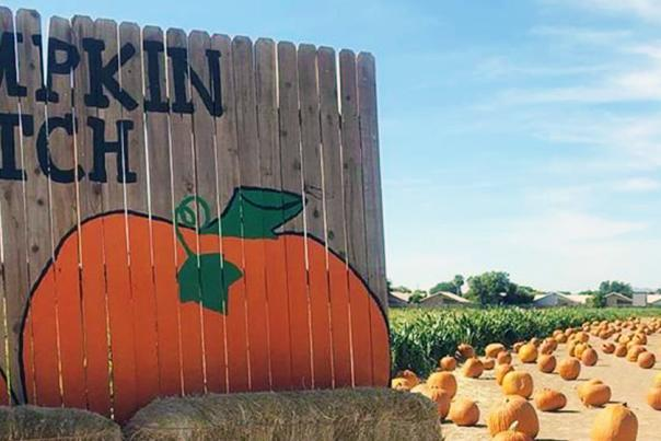 Pumpkin Patch at Tolmachoff Farms UGC