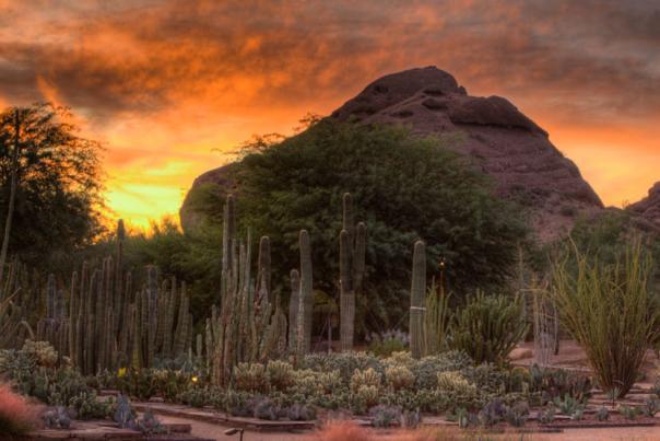 Desert Botanical Garden 2- Header