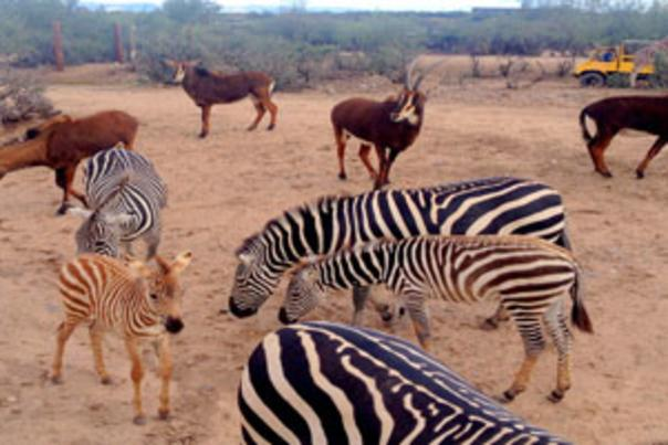 out-of-africa-savannah-360×201