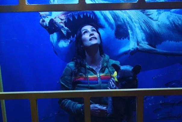 Avila's New Shark Exhibit