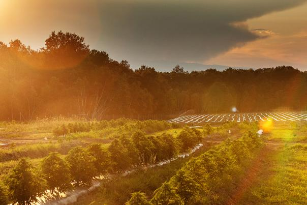 Sustainable Garden in the Pocono Mountains