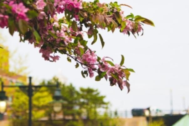 Spring Providence