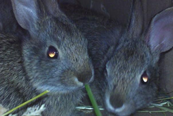 Easter Fun at the RWP Zoo